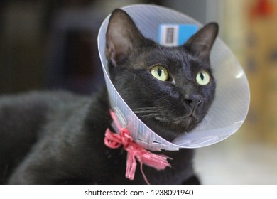 Black cat wearing Elizabethan Collars