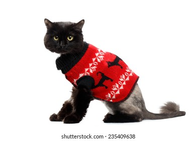 Cat In Sweater Images Stock Photos Vectors Shutterstock