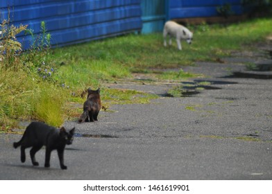 a black cat and a white dog walk along an asphalt road with puddles after the rain