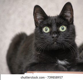 black cat with a white spot on the chest