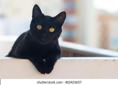 Black cat yellow eyes