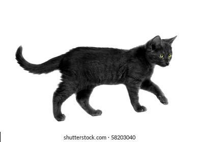 Black cat with yellow eyes walking on white