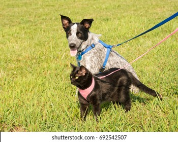 Black cat and a young dog in harness against green grass background