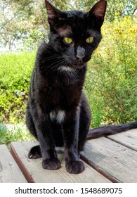 Black cat. Young cat with Evil physiognomy. Pet animal sits on the wood table in the flowering garden