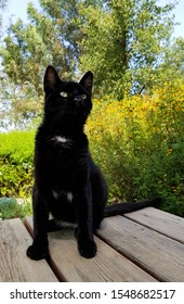 Black cat. Young cat pet with pleased physiognomy sits on the wood table in the flowering garden