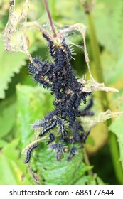 Black caterpillar. Future butterflies. The invasion of the caterpillars on the blooming field. The tangle of tracks.