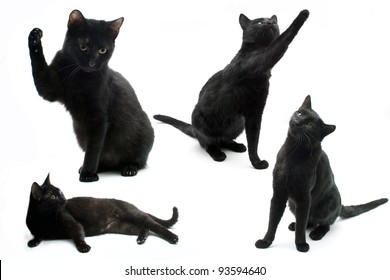 Black cats isolated on a white background