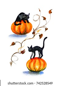 Black Cats on pumpkin hand drawn watercolor illustration. The Symbol Of Halloween. Paper textured card