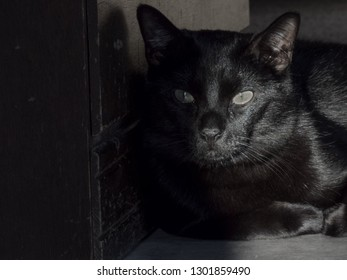 A black cats sits against a wooden dresser in the shadows, as a cast of light crosses his face leaving a silver shimmer to his fur.