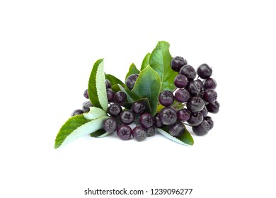 Black Chokeberries( Aronia Melanocarpa) with leaves  isolated on white background.