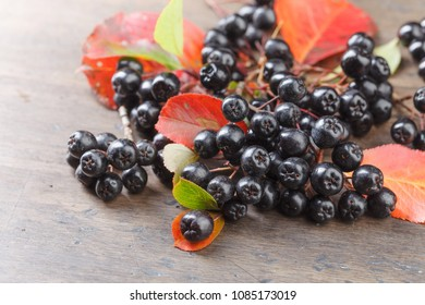 Black chokeberry (aronia melanocarpa) with autumn leaves on wooden table.