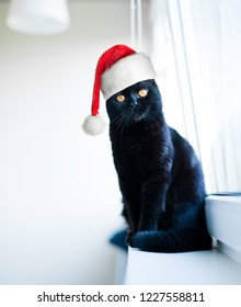 black christmas cat in red Santa Claus hat