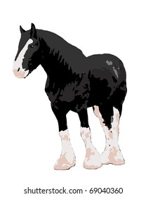 Black clydesdale draft horse.