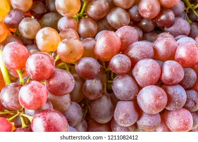 Black Corinth  or Champagne grapes, specialty produce. The fresh fruit of zante currants are very small and sweet, with quite intense flavor.