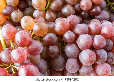 Black Corinth  or Champagne grapes, specialty produce. The fresh fruit of zante currants are very small and sweet