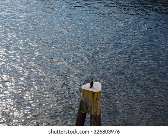 Black cormorant sea bird watching sea from top of piling at water's edge. Water is wrinkled by light wind and reflecting sunshine in abstract pattern.  surface of water is blue silver & white