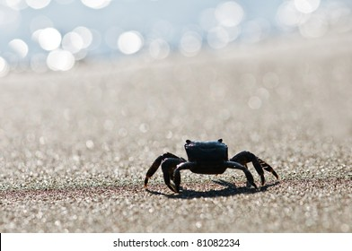 black crab on sand closeup