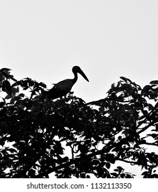 Black crane birds sitting on a tree isolated unique photograph