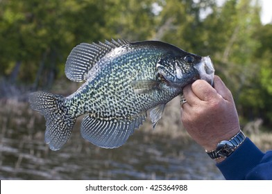 Black Crappie Fishing