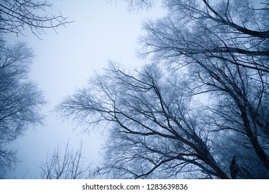 Black crones of trees on a sky background. Russian provincial natural landscape in gloomy weather. Toned.