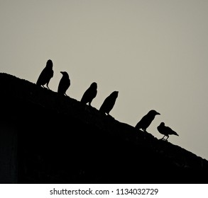 Black crow birds sitting on a place isolated unique photograph
