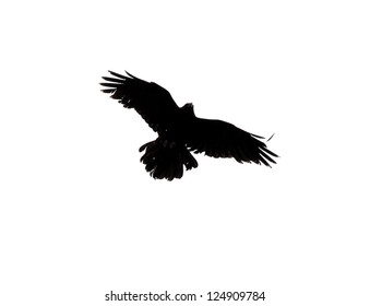 Black Crow Flying on White Background