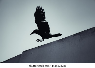 Black crow flying under blue sky, dark stylized silhouette photo with tonal filter effect