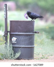 Black crow holding a wrapper on top of a public trash can