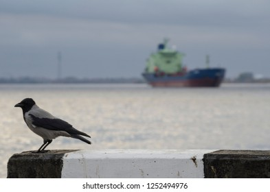 Black crow on the background of the ship
