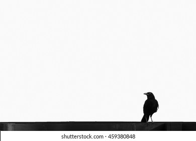 Black crow perched on a black fence isolated on white background