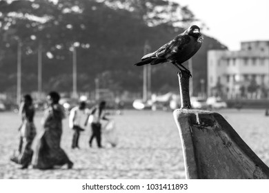 black crow sitting on boat, people walking on the beach.