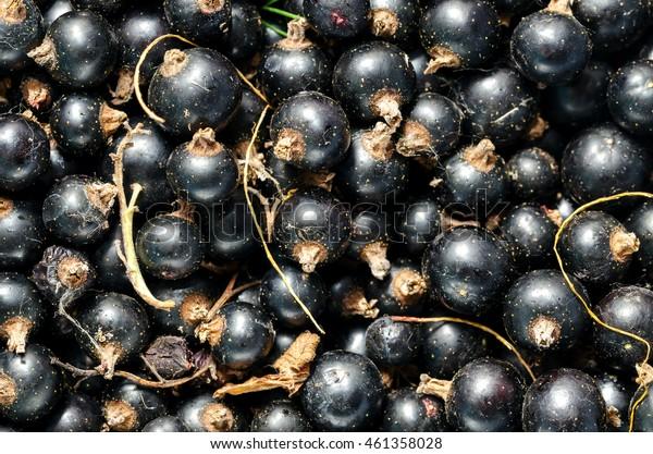 Black Currant. Background. Close-up.