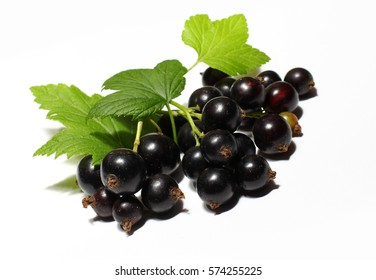 Black currant berry close up isolated on white background.