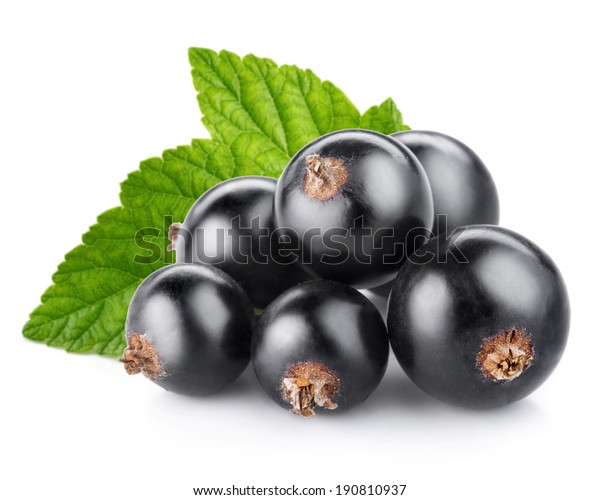 black currant berry isolated on white