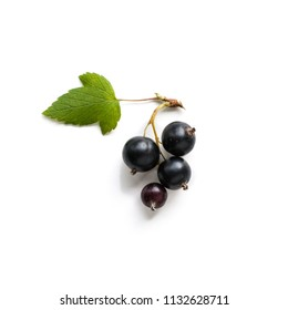 Black currant ( or blackcurrant) bunch with leaves on white.