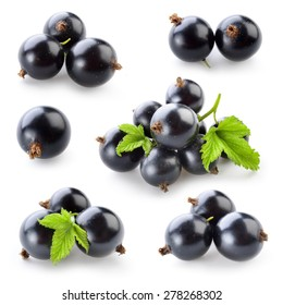 Black currant isolated on white. Collection
