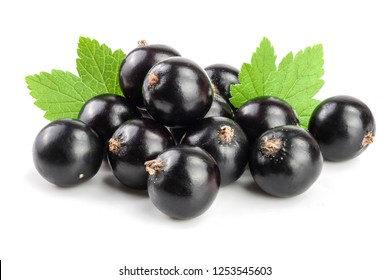 black currant with leaf isolated on white background