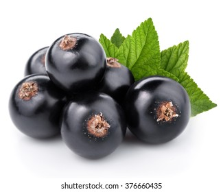 Black currant with leaves isolated