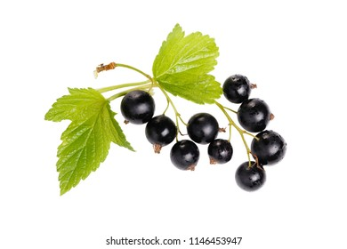 Black currant with leaves isolated. on white. Sprig of berries close-up