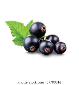 Black currant on the white background
