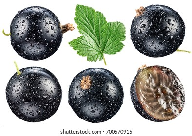 Black currant with water drops on the white background. File contains clipping paths.