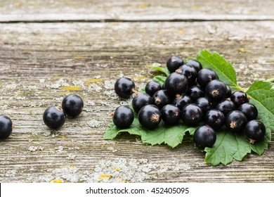 Black currants on the green blackcurrant bush leaf, on the wooden gray background, gardening and healthy food concept