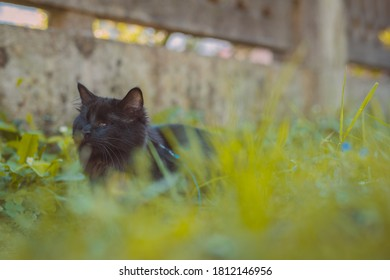 Black cute blind small cat is sitting in a garden and waiting. Portrait of an impaired or blind black cat.