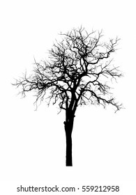 black dead tree silhouette, isolated on white background