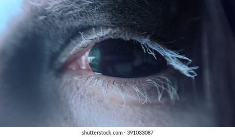 Black demon eye. Macro.
