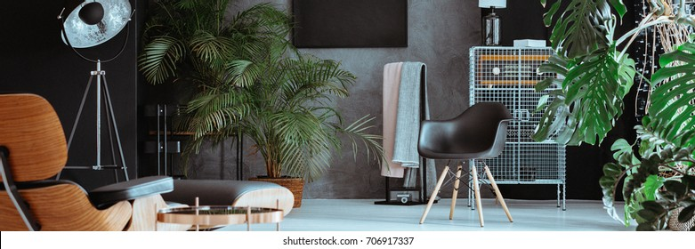 Black designed chair, lamp and wooden chaise lounge in living room with trees