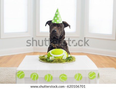 Black Dog In Birthday Hat With Cake