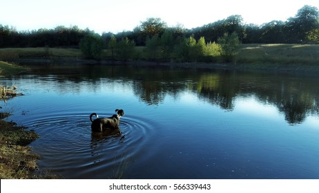 Black dog in blue pond water surrounded by trees.