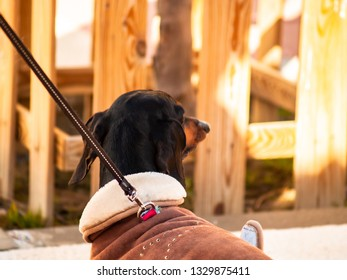 A black dog dressed in a coat walking down the street of a city with its owner