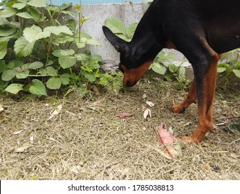 Black dog exploring yard in Japan